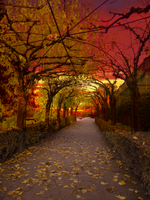 Red Avenue --- Premade Bg by AnOtherSunrise