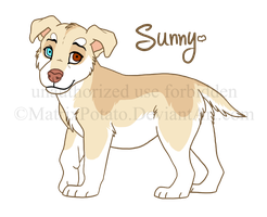 Sunny the Pitsky (DoC) by MatrixPotato