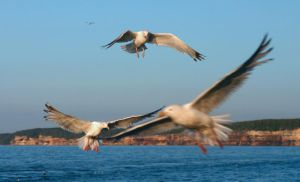 Seagull Sqaudron by LakeFX