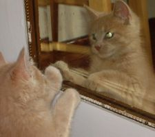 Who's this in the mirror by Buhla