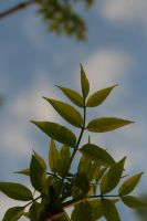 Some Leaves by greenwalled1