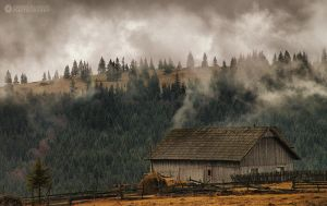 Foggy morning III by adypetrisor