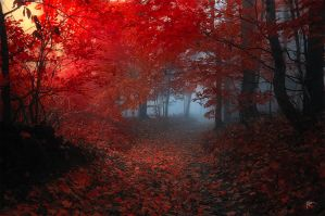 -Lucid dreaming- by Janek-Sedlar