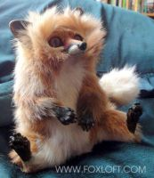 Kettu - Fox Doll by Foxfeather248