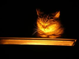 Cat on fire by BigA-nt