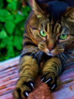 Tiger Stretch by The-Human-Abstract91
