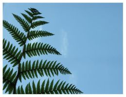 Fronds by BemusedBonnie