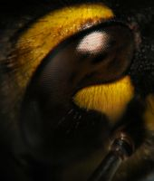 Hornet's Eye by PancolartJorge