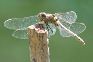 ready to take off by Dieffi