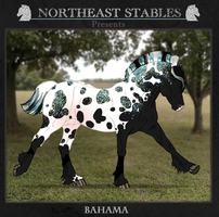 ES Bahama 1479 by NorthEast-Stables