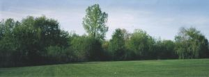 Curved Treeline by fearsome