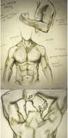 Male Muscle Study by girldirtbiker