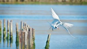 The Take Off by DeniseSoden