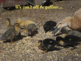we cant all be yellow by keeatah