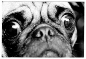 Pug Love 2 by oolostentity