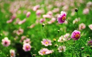 Widescreen flower WP by Guts80