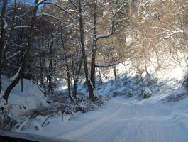 Snowy Road in the Forest by SDolha
