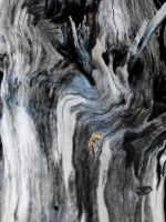 Wood texture2 by Feeriee13