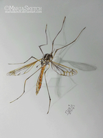 BIG Mosquito - Ballpoint Pens by MariaSketch