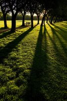 long shadows by stachelpferdchen