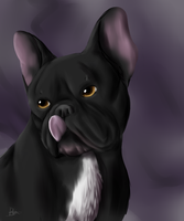 French Bulldog - August by BE-Arts