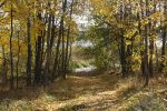 Place 7: Forest Road 2 by MystStock