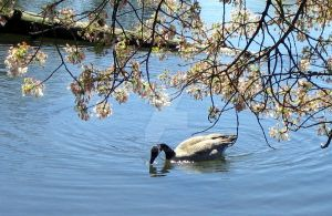 Goose and Blossoms by ryark