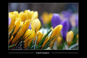Crocus II by tomsumartin
