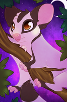 ACEO sugar glider by CrispyCh0colate