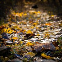 the death of a leaf by rdalpes