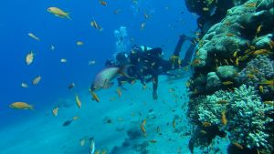 Diving in Eilat :D by WolfSoulKeeper