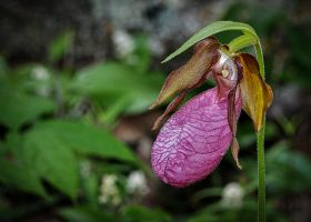 Well-Named Orchid4 by pinestater234