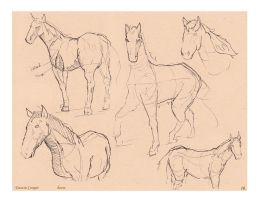 Horse 3 - Comparative Anatomy by CatCouch