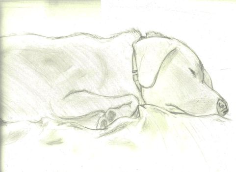 Sleeping Dog by Aazerus