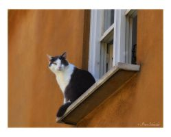 Cat by Phototubby