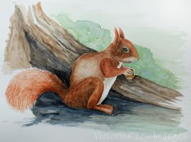 Red squirrel - watercolor by LittleMissRaven