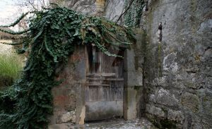 Ivy old door by lhauert