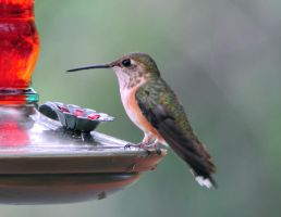 Hummer Break Time by m-faccone