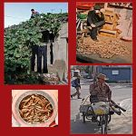 Street. Hutong's. China by jennystokes