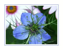Blueish is the world by PhilipCapet