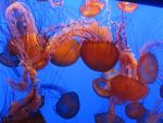 Jellyfish by robichaud
