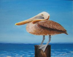 Pelican on a post by samtaylor5