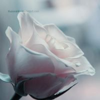 every tear by illusionality