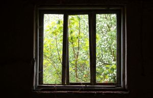 a window on the nature by nbd12