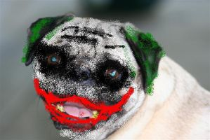 Why so Serious? by neaters2000