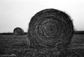 Hay by evanjacobs