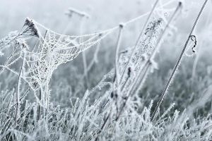 Icy spring morning spiderweb by GalagoDeCodi