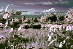 Country Serenity by Pennes-from-Heaven