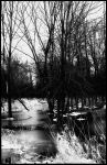 B and W Trees by BeckyMarie73