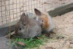More cute baby bunnies by purstotahti